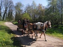 Haflinger unterwegs©Reit- und Fahrverein Bötenberg-Wietzen